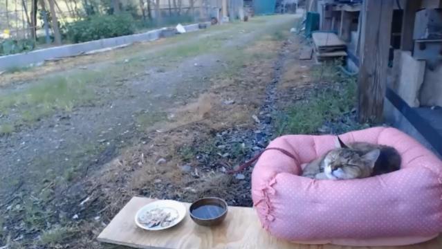 お外で留守番19 - 食後のお昼寝02