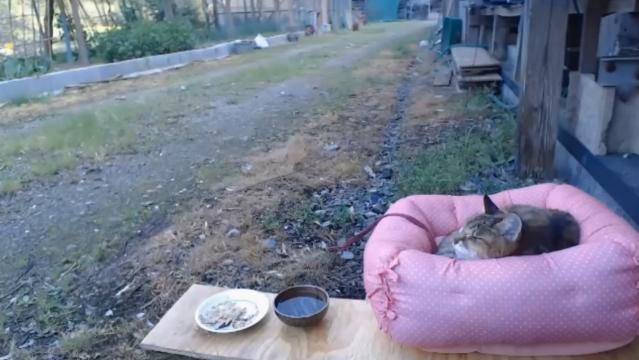 お外で留守番18 - 食後のお昼寝01