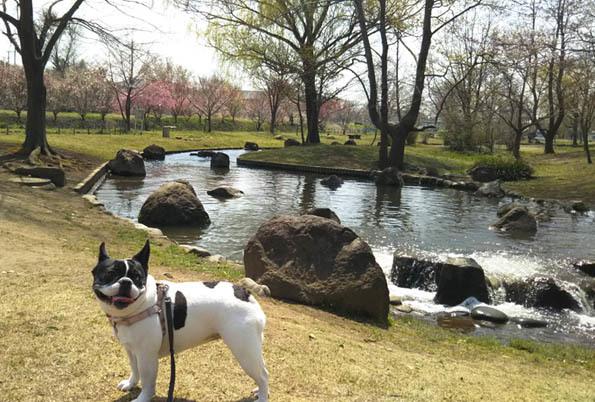 20170405 水元公園 21㎝ DSC_0157