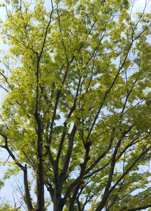 20170430 新緑 21cm DSC_0228