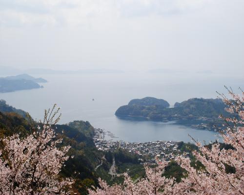 桜満開の野福峠