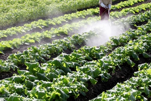 畑の農薬散布