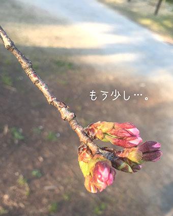 IMG_5688_20170329004300626.jpg