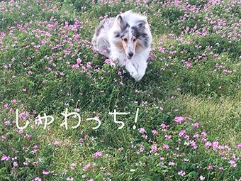 IMG_6837.jpg
