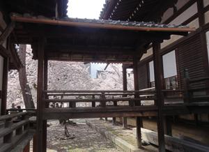 立本寺blog03
