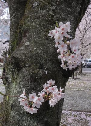 立本寺blog08