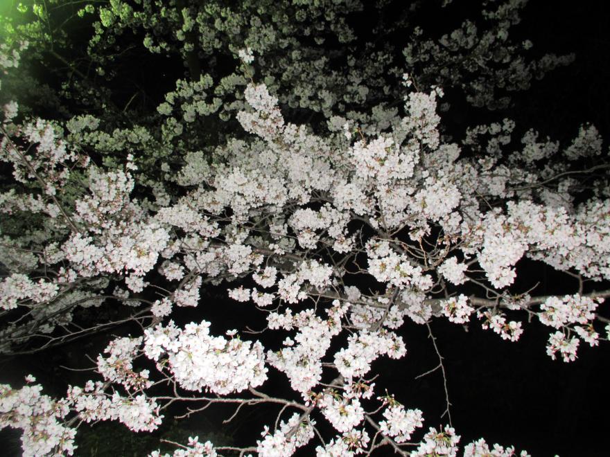 大阪城夜景3