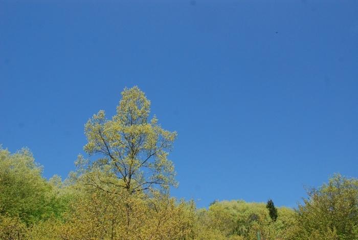 空の青と萌える若葉6