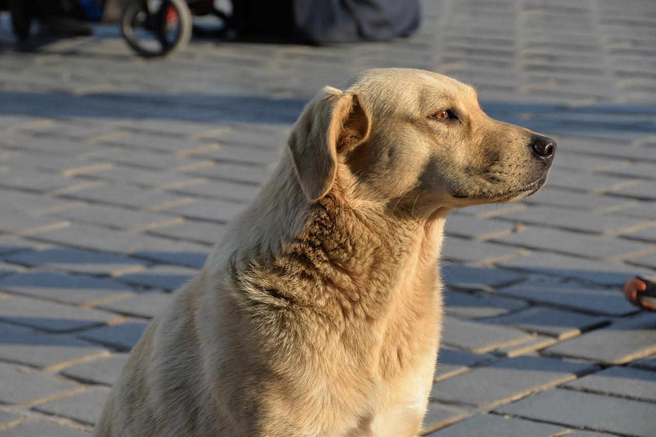 dog-1466054_1280.jpg