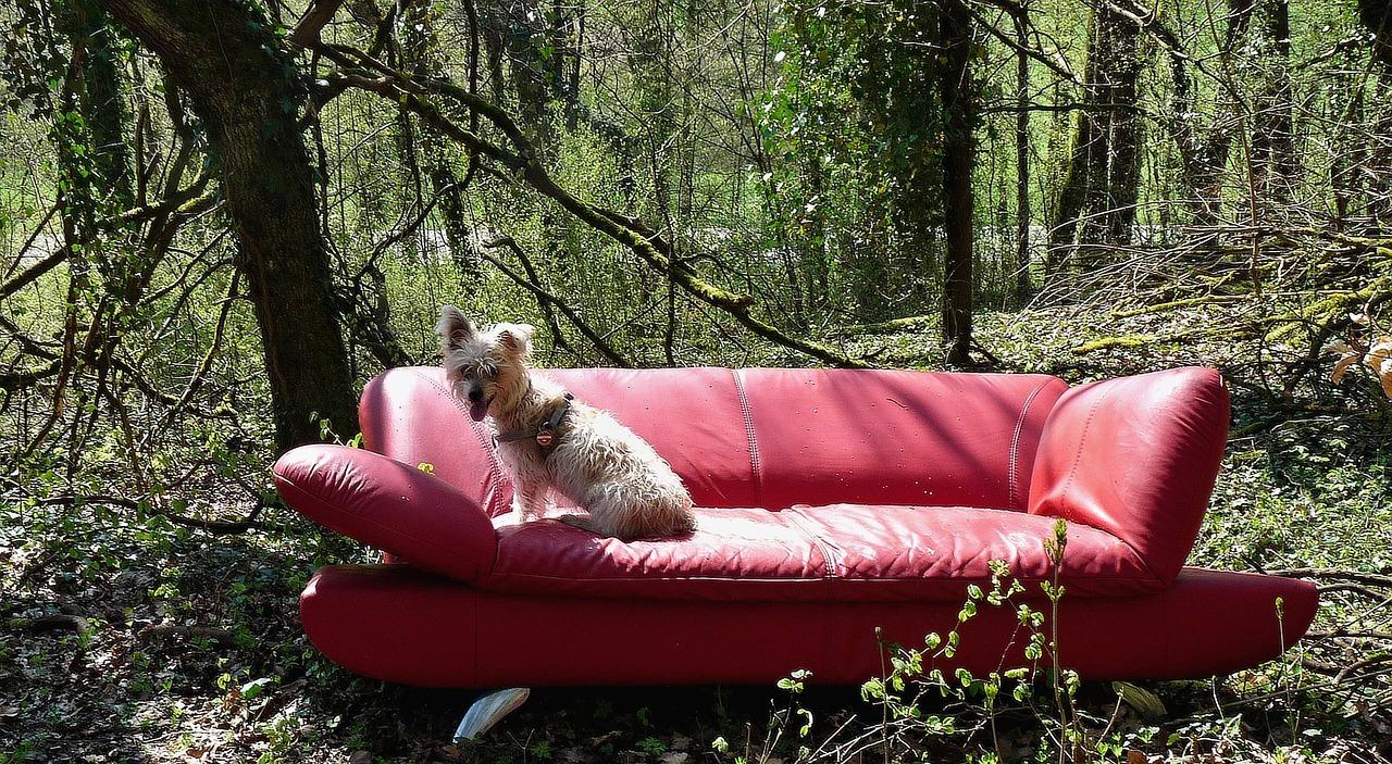 red-sofa-1320901_1280.jpg