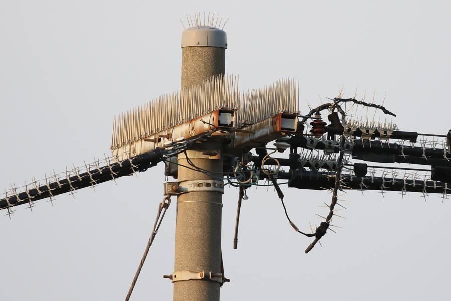 2017-4-天白川の電柱