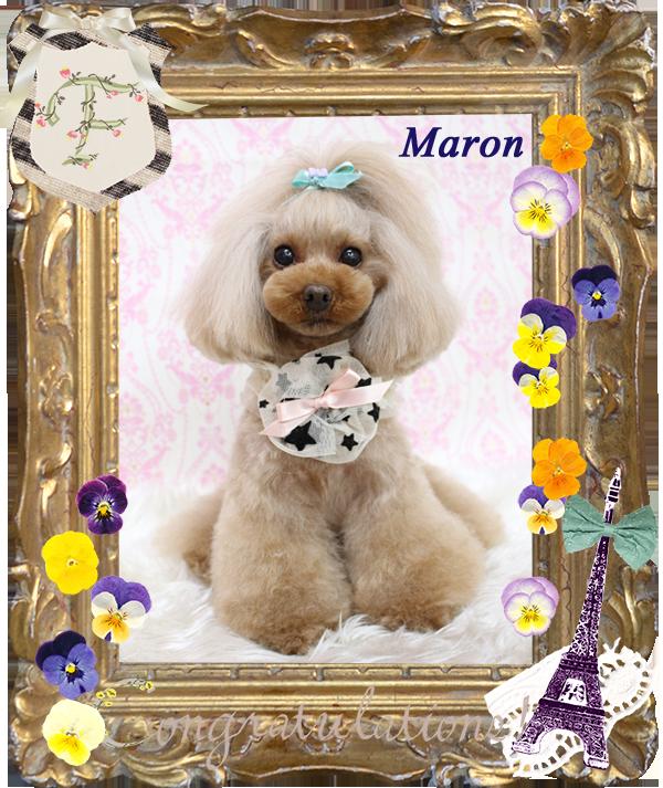 マロンちゃん3-1
