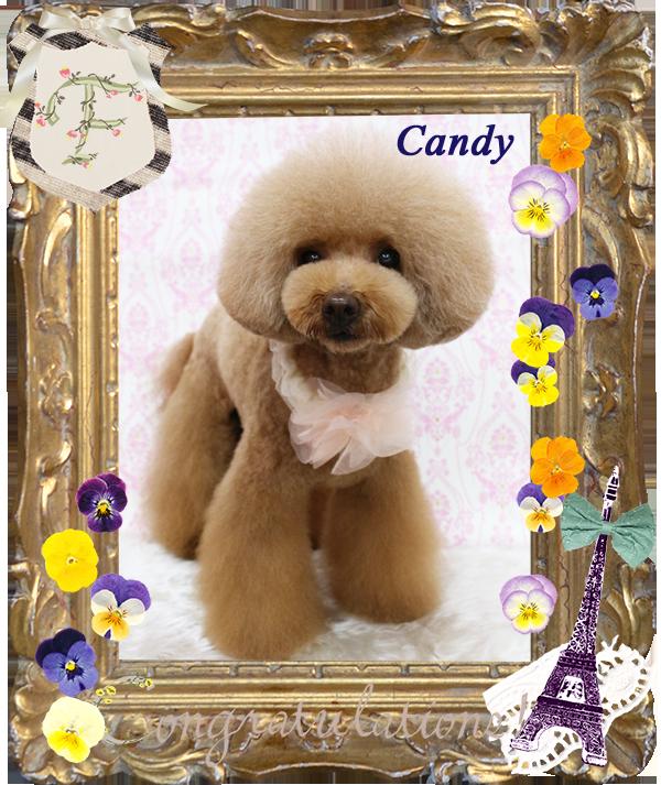 キャンディーちゃん3-1