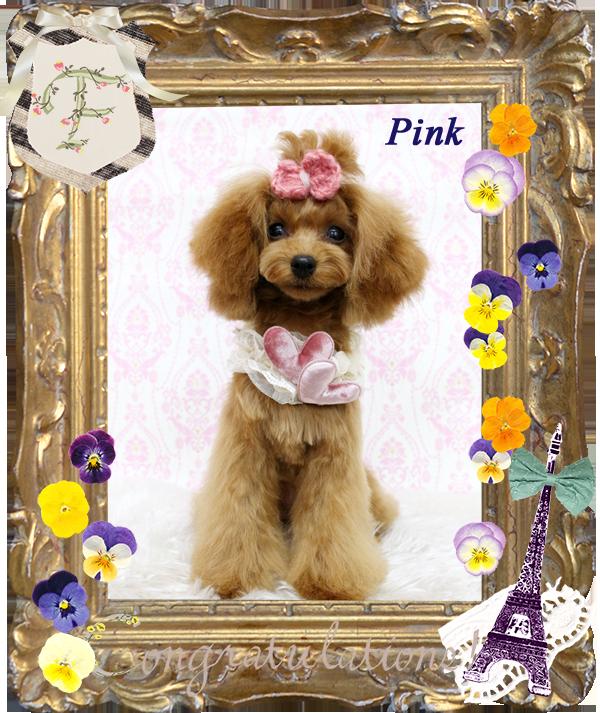 ピンクちゃん 3月-1