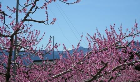 富士山近景