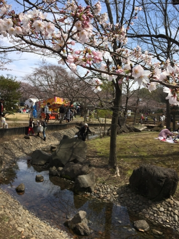 城址公園桜2017 5