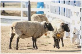 170311E 030羊@羊山32