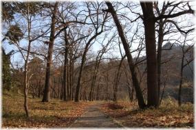 170318E 021樹林32