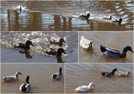 170228鹿児島二日目池の鳥