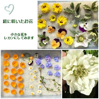 三月 庭の花を・・・