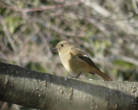野鳥清水山 055