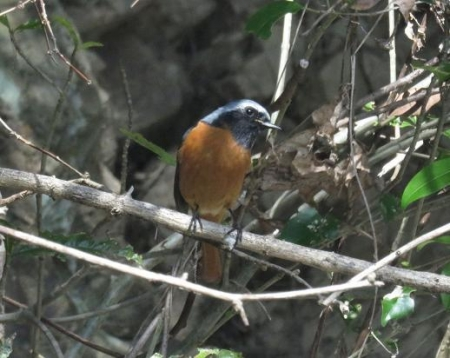 野鳥清水山 041