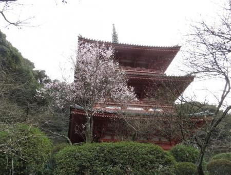25日清水の桜 065