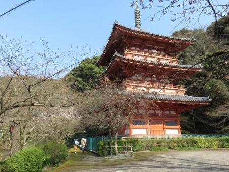 28日大川ヒヨと清水桜 156