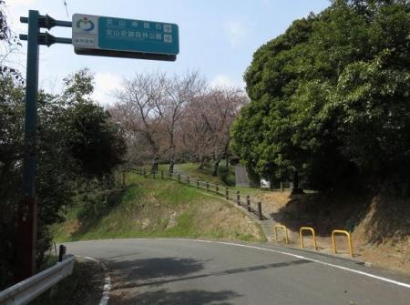 桜30日清水山 117