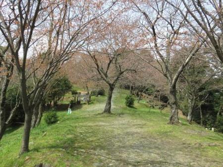 桜30日清水山 119