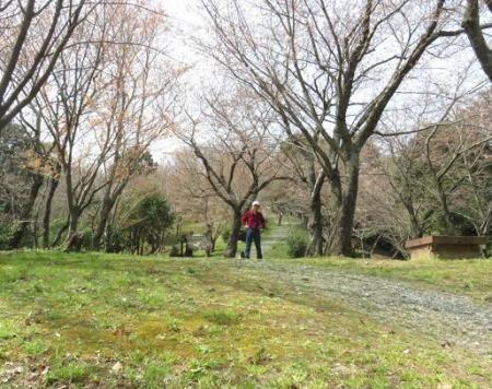 桜30日清水山 172
