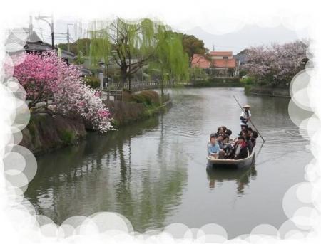 ヒヨドリ柳川桜 022