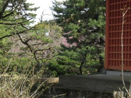 4月2日大川公園ヒヨドリ 006
