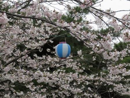 アトリ8日大川公園 091