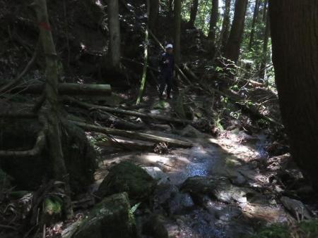 井原山1・2輪草 007