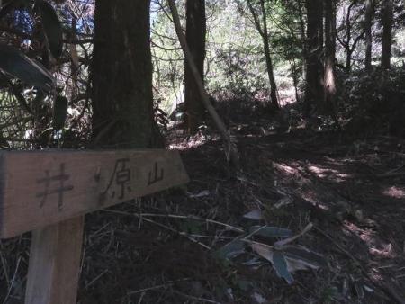 井原山1・2輪草 006