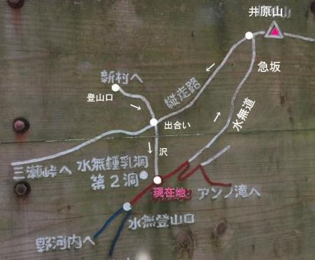 井原山1・2輪草 124