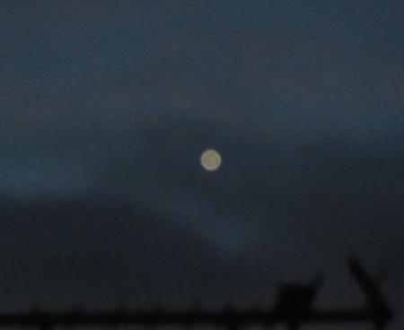 金星 004
