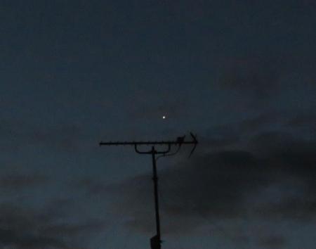 金星 002