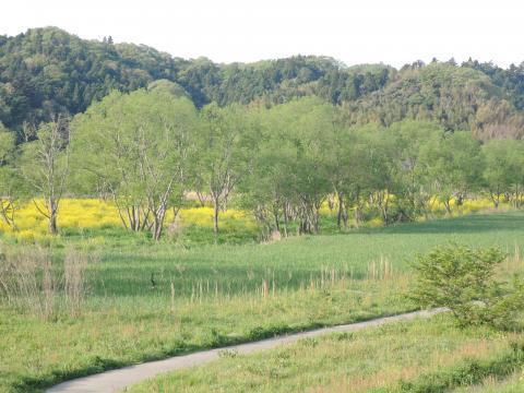 夏井川の風景4