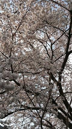 福島にも春が