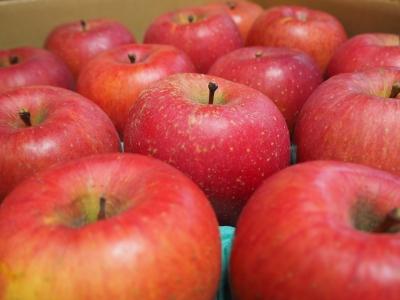 N_studiomimosa豊科リンゴ