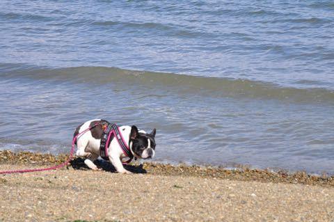 岸辺で遊び