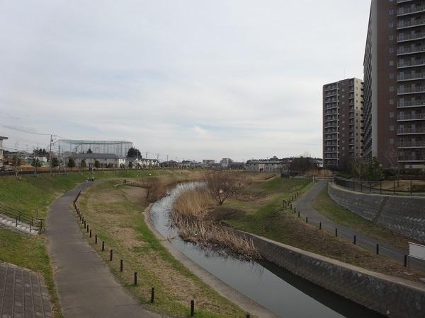 20170301大堀川 (4)