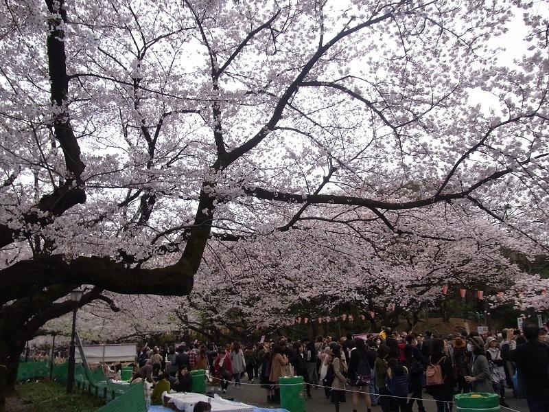 うえの桜祭り