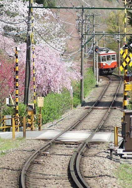 桜の中をいく登山電車