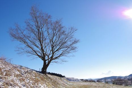 雪晴れの朝1702-3