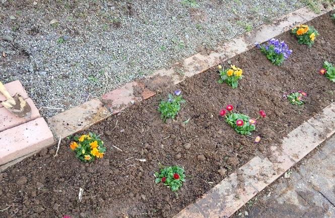 2017.03花壇の花植え