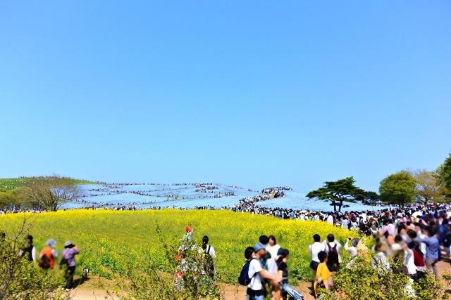 国営ひたち海浜公園 (4)
