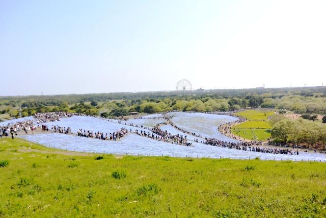 国営ひたち海浜公園 (15)
